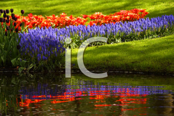 Royalty Free Photo of a Garden of Flowers