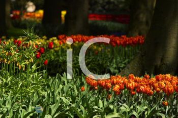 Royalty Free Photo of a Garden in the Netherlands