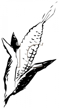 Royalty Free Clipart Image of an Ear of Corn