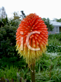 Royalty Free Photo of a Spiky Flower