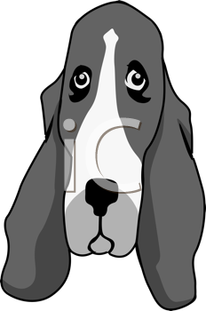 Royalty Free Clipart Image of a Basset Hound