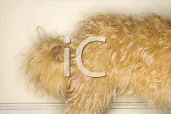 Royalty Free Photo of a Dog's Hing Legs