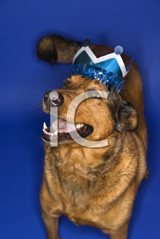 Royalty Free Photo of a Dog Wearing a Crown