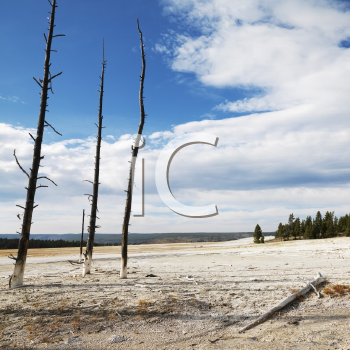 Royalty Free Photo of a Landscape of Dead Tress on a Shoreline at Yellowstone National Park, Wyoming
