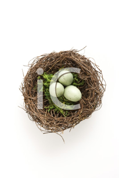 Studio still life of bird's nest with three speckled eggs