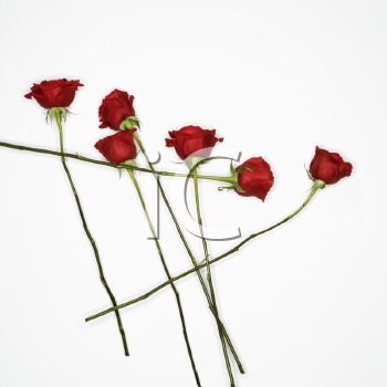 Royalty Free Photo of Long-Stemmed Red Roses