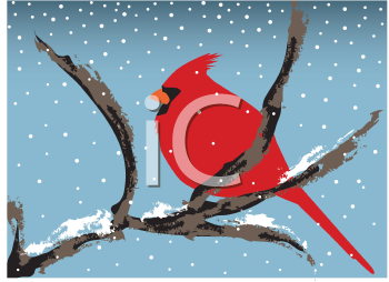 Royalty Free Clipart Image of a Red Cardinal Sitting on a Branch