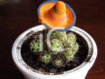Royalty Free Photo of a Planted Cactus in a Sombrero