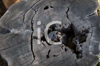 Royalty Free Photo of a Log With a Hole in It