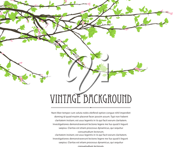 Spring background with blossoming tree brunch against white background