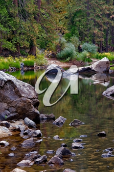 Royalty Free Photo of a Brook in Sequoia Park