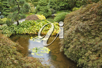 Decorative Japanese garden. A stream, small island with a grass and bushes