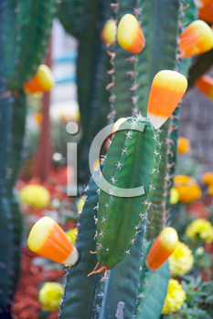 Royalty Free Photo of Candy Corn on Cactus For Halloween