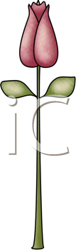 Royalty Free Clipart Image of a Rosebud