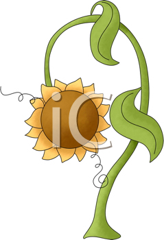 Royalty Free Clipart Image of a Drooping Sunflower