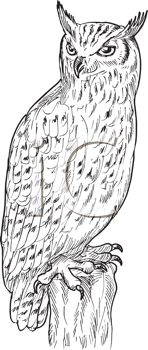Royalty Free Clipart Image of a Sketch of an Owl