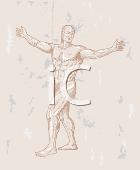 Royalty Free Clipart Image of Muscular Male Anatomy