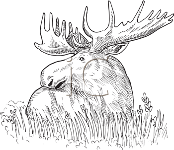 Royalty Free Clipart Image of a Moose Sketch