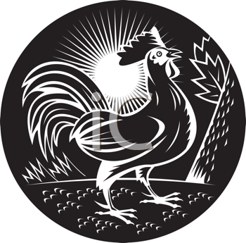 Royalty Free Clipart Image of a Crowing Rooster