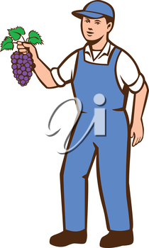 Illustration of an organic farmer boy wearing hat standing holding grapes viewed from the front set on isolated white background done in retro style.