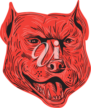 Drawing sketch style illustration of an angry pitbull dog mongrel head facing front set on isolated white background.
