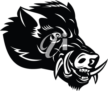 Mascot illustration of head of a wild boar, Sus scrofa, wild swine, common wild pig, a suid native to the Palearctic viewed from side on isolated background in retro woodcut black and white style.