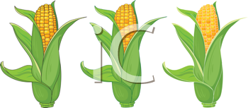 illustration of a collection corn