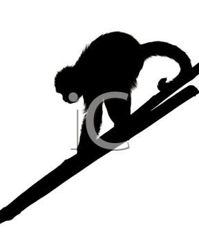 Royalty Free Photo of a Silhouette of a Monkey