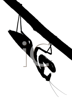 Royalty Free Photo of a Silhouette of a Praying Mantis