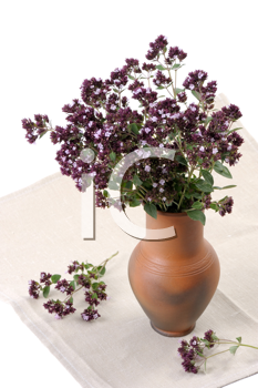 Royalty Free Photo of Flowers of Aromatic and Medicinal Plants in a Vase