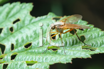 Royalty Free Clipart Image of a Fly on a Leaf