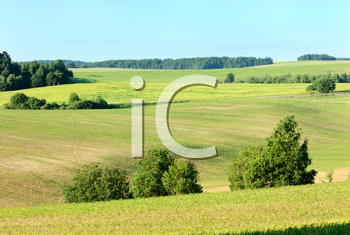 Royalty Free Photo of a Field in Early Summer