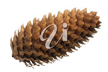 Empty fir-cone on a white background, isolated