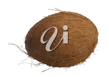 A coconut, isolated on a white background.