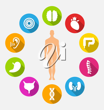 Illustration Silhouette of Male and Internal Human Organs, Colorful Flat Icons with Long Shadows - Vector