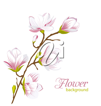 Illustration Beautiful Magnolia Branch, Exotic Flowers. Summer and Spring Floral Background - Vector