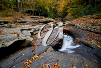 Royalty Free Photo of a Forest Stream in Autumn