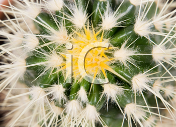 Royalty Free Photo of a Cactus