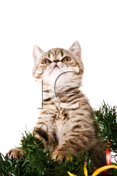 Royalty Free Photo of a Kitten in a Christmas Tree
