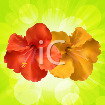 Royalty Free Clipart Image of Hibiscus Flowers on a Green Background