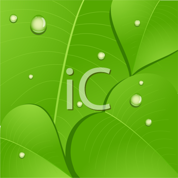 Royalty Free Clipart Image of a Close-up of a Leaf With Water Droplets