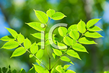 Royalty Free Photo of a Green Plant