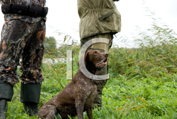 Royalty Free Photo of a German Pointer and Two Men Hunting