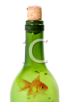 Royalty Free Photo of a Goldfish in a Bottle of Wine