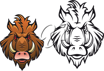 Head of angry boar for sports mascot design in color and black variations