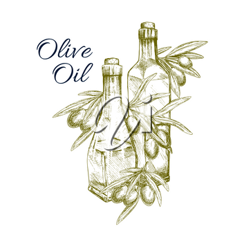 Olive oil sketch of fresh green or black olives and branches. Olive tree fruits and bottles symbol for healthy Italian cuisine or extra virgin sort food product packaging