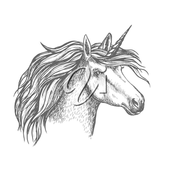 Unicorn head sketch. Heraldic equine head of mythical horse, with long horn and wavy mane. Mythic isolated symbol of fantasy horse for astrology, fairytale story book design