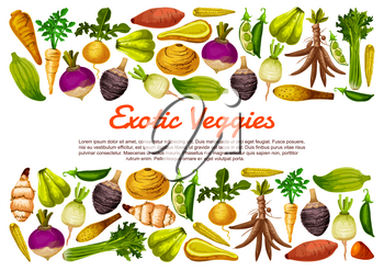 Root vegetables and exotic veggies farm harvest poster. Vector Jerusalem artichoke, radish and sweet potato with cassava, parsnip celery and bread beans, arracacia vegetable and chayote