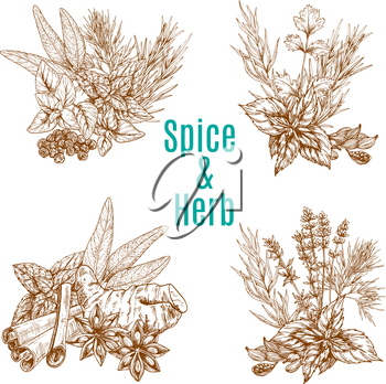 Herbs and spices vector poster of rosemary, tarragon or cloves and bay leaf or peppermint, spicy chili pepper and cardamom or parsley. Sketch design of arugula, vanilla or lavender herbal condiments