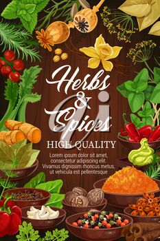 Organic spices and herbal seasonings in bowls, cooking design. Vector vanilla, poppy seeds and red chili pepper, ginger root or celery and wasabi with basil or dill and parsley